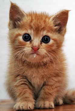 Nos conseils pour recueillir un chaton abandonné