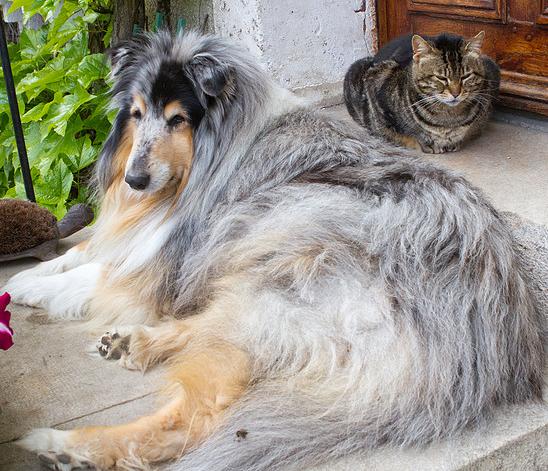 Un chien et un chat peuvent-ils cohabiter sous le même toit ?