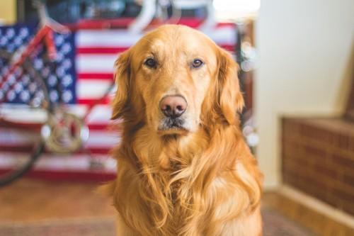 Nos amis, les chiens – Animaux et Compagnie