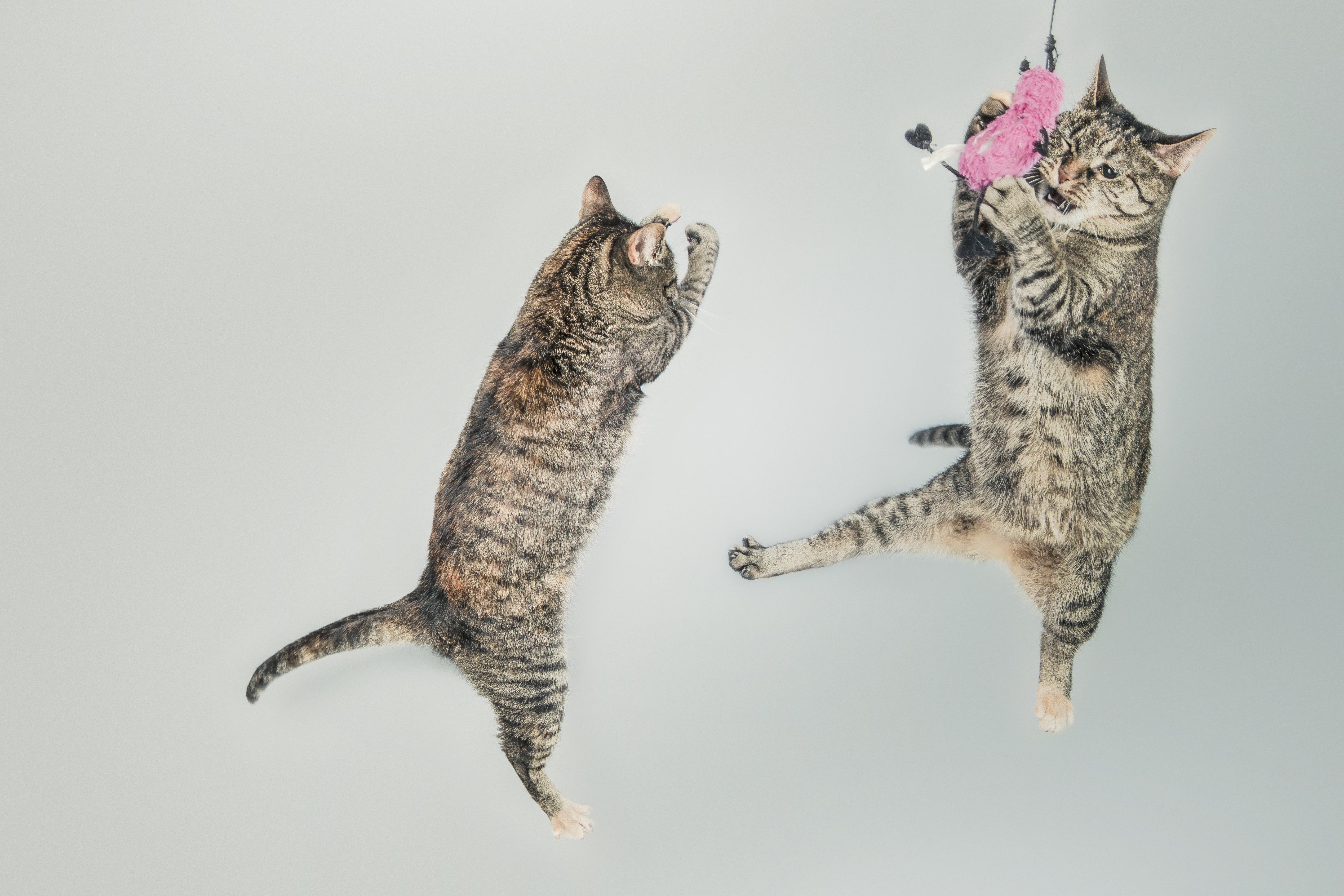Nos amis, les chats