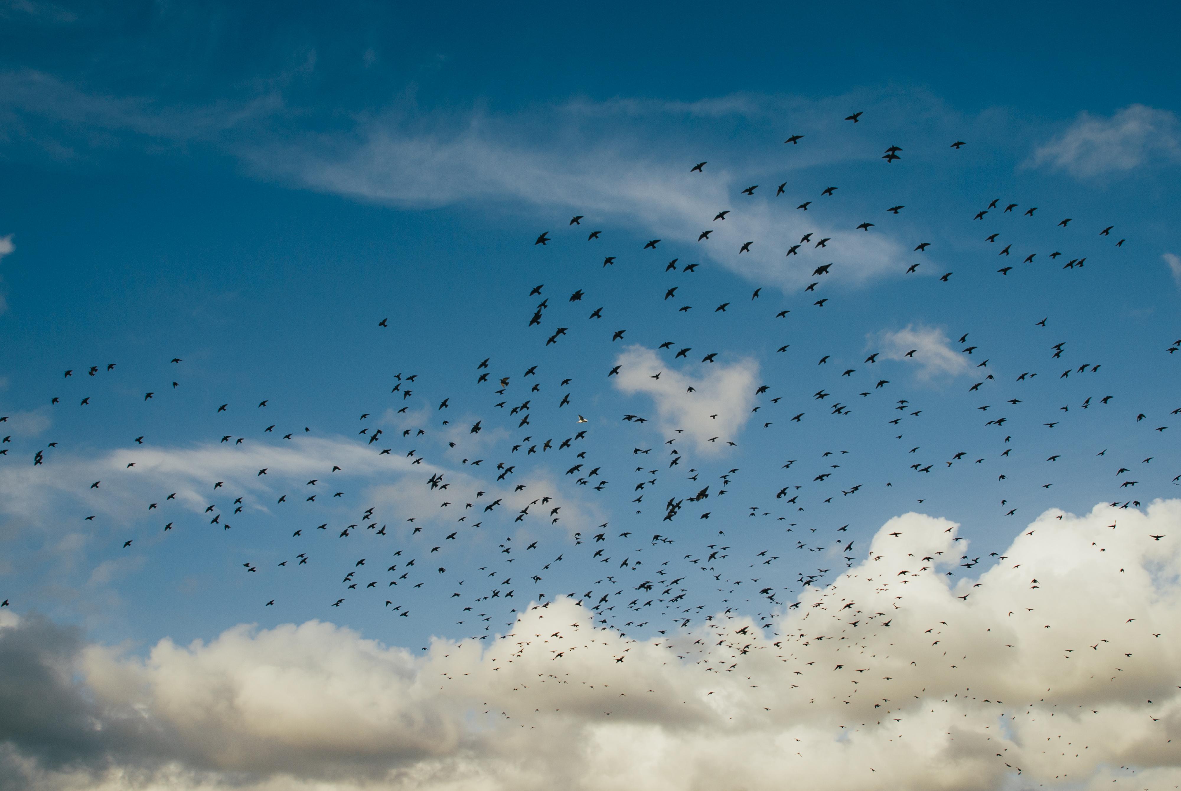 Les oiseaux, les animaux les plus enviés