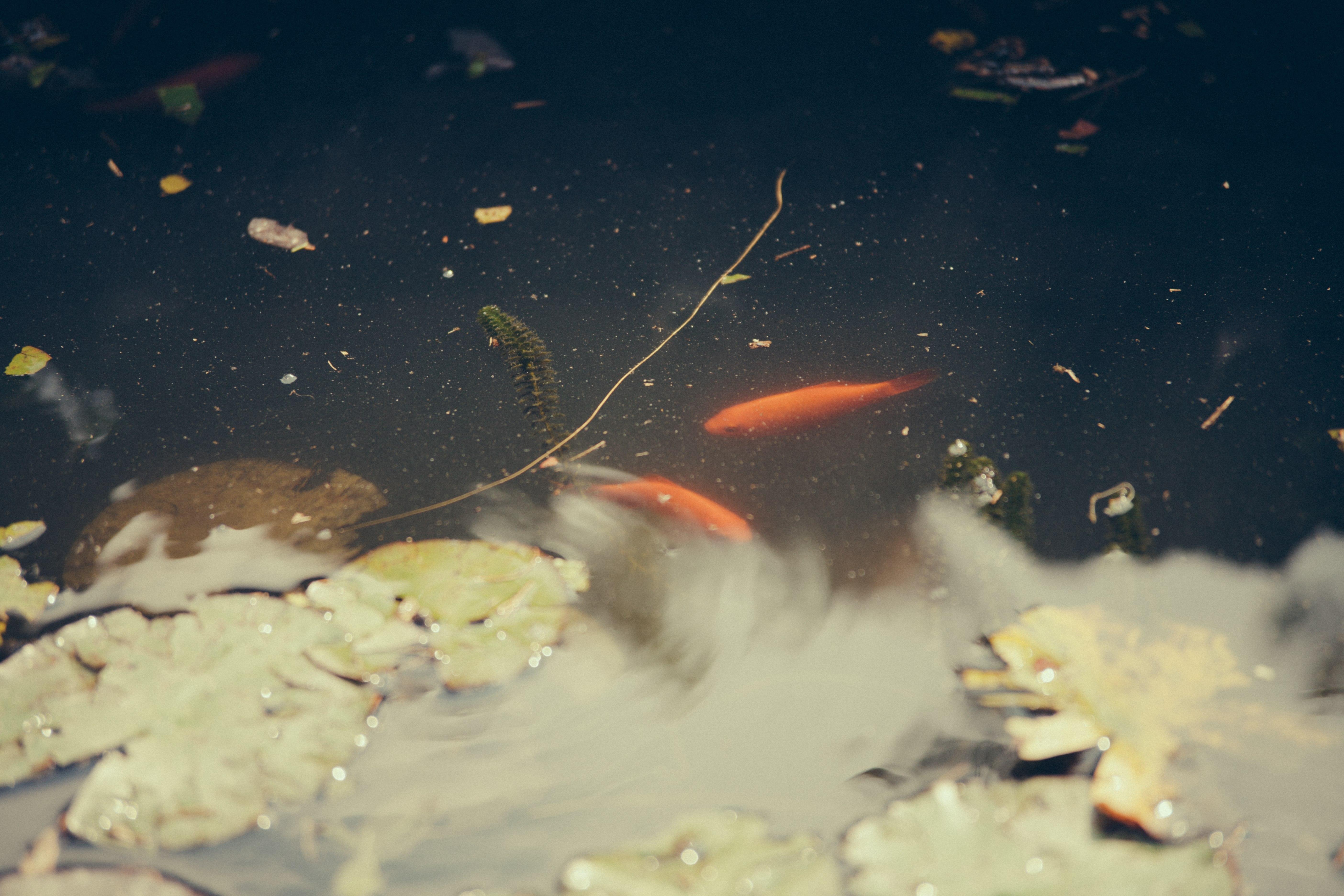 Les ménages et leurs poissons rouges