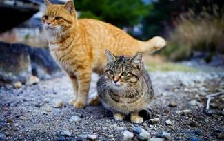 île aux chats