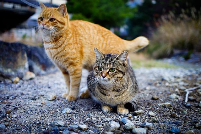 L'île aux chats : bienvenue à Aoshima !