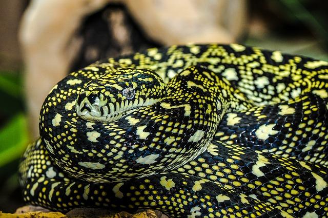reptiles domestiques