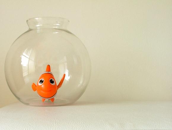 aquarium-1545155