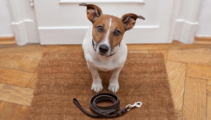 7 conseils pour distraire un chien