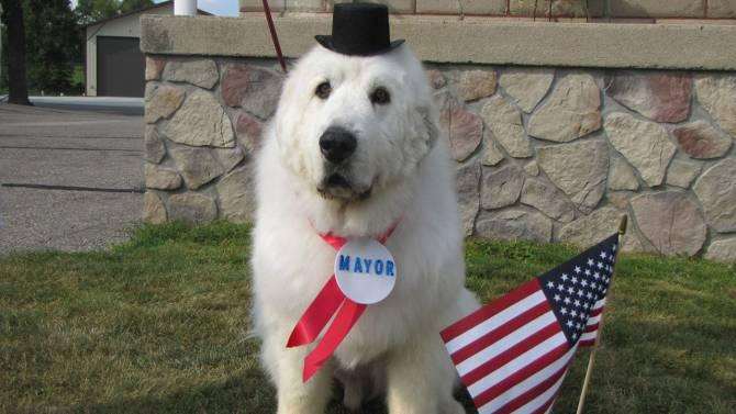 Insolite : les animaux maires aux États-Unis