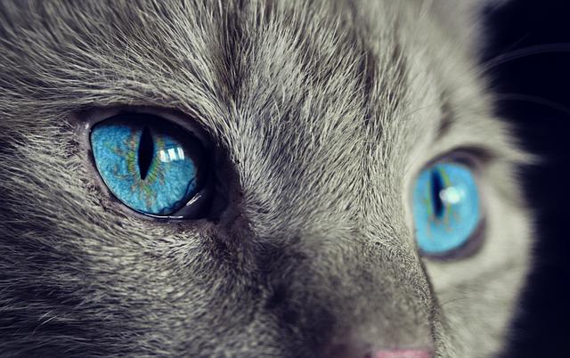 Le chat et sa perception du monde