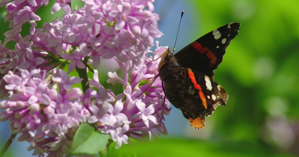 Jean-Yves Stoquer : la disparition massive des papillons