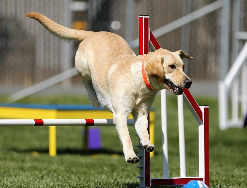 Le sport, un moyen de garder son chien en forme