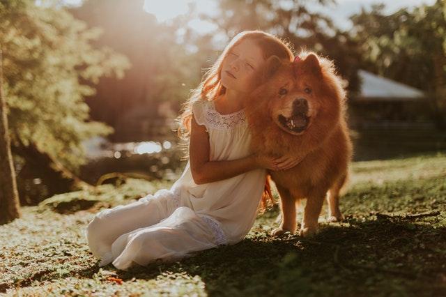 Quelques conseils à prendre en compte avant d'adopter un animal