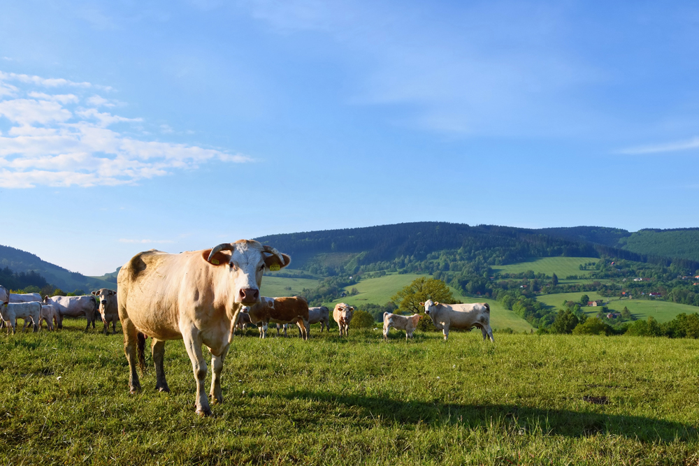 Les coopératives agricoles françaises par Olivier Dekokère